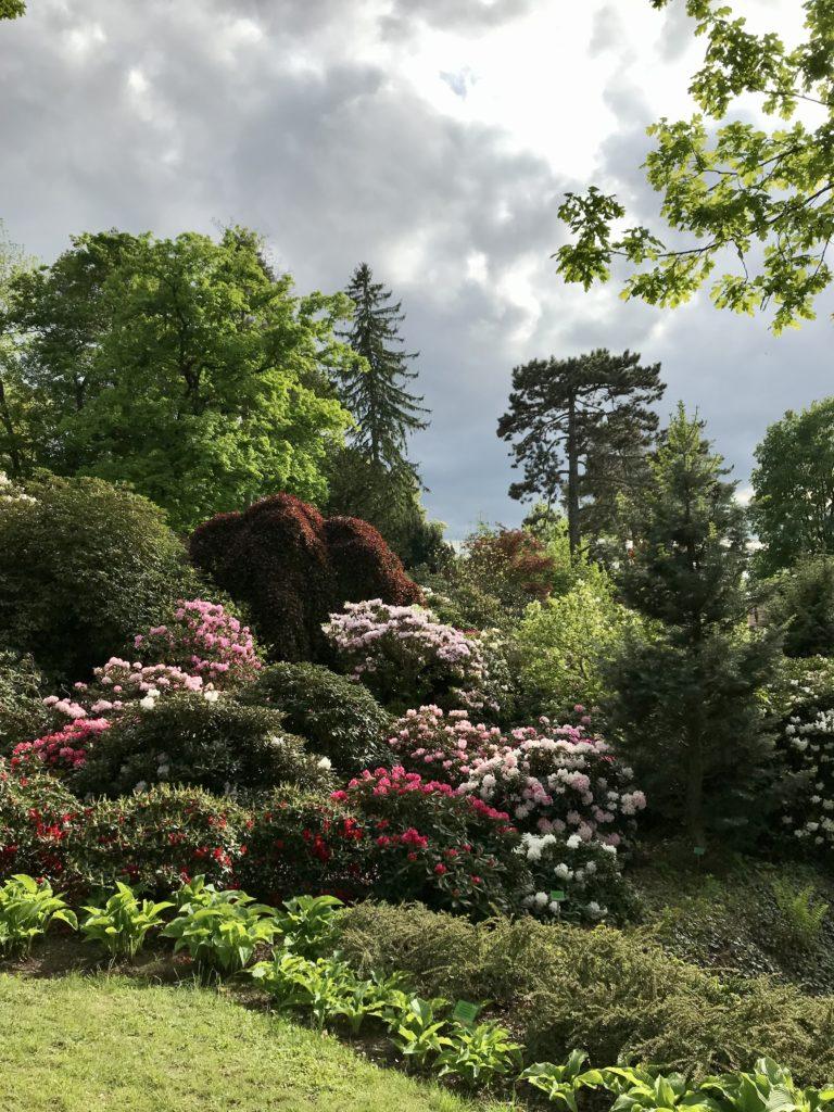 Arboretum Niemcza