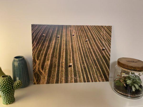 Fotodruck Natur Niederschlesien Breslau